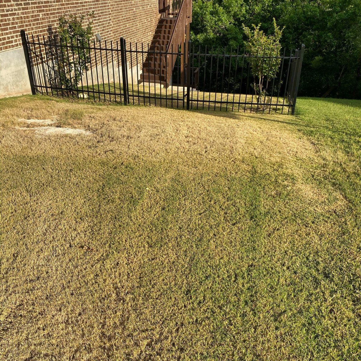 A brown patch of bermudagrass lawn
